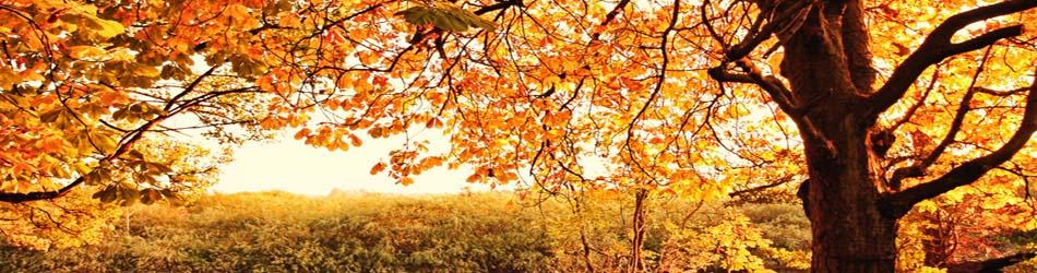 autumn_header1379062807
